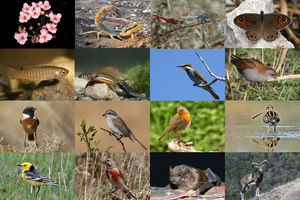 Η νέα γενιά για την προστασία της βιοποικιλότητας
